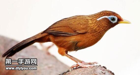 阴阳师姑获鸟信物线索在哪 线索图片鸟分享