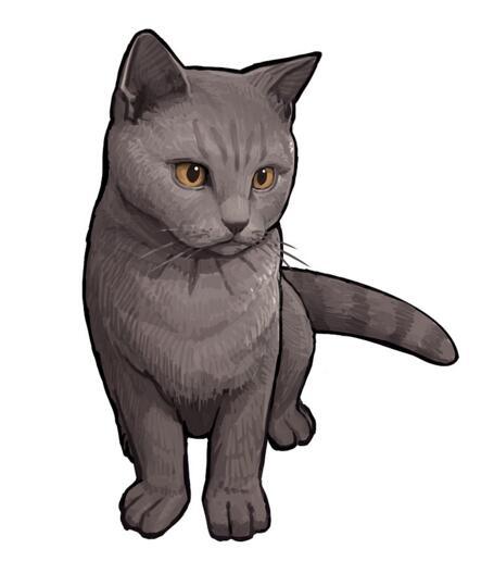 阴阳师九命猫信物线索是什么 线索图片猫分享