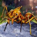 解救星际小蚂蚁