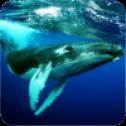 座头鲸模拟器