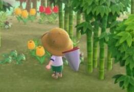 动物森友会竹子素材岛有什么好东西